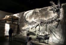 Royal Tyrrell Museum Foundation exhibit