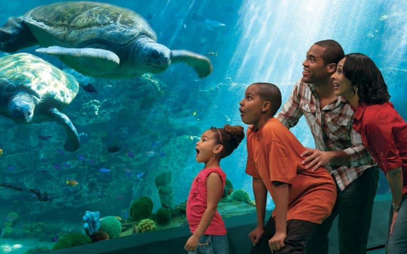 seaworld-san-diego california lockdown theme parks