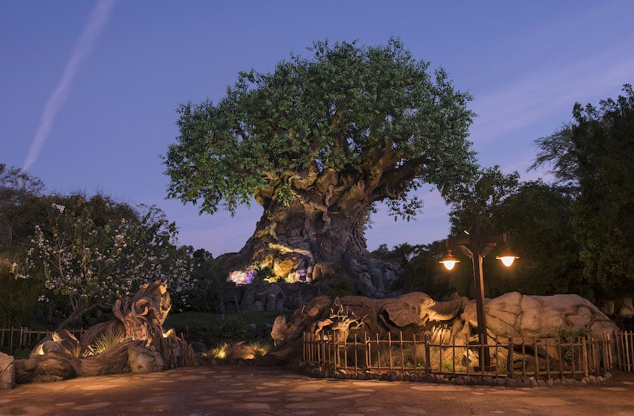 Animal Kingdom's Tree of Life, the centrepiece of Discovery Island