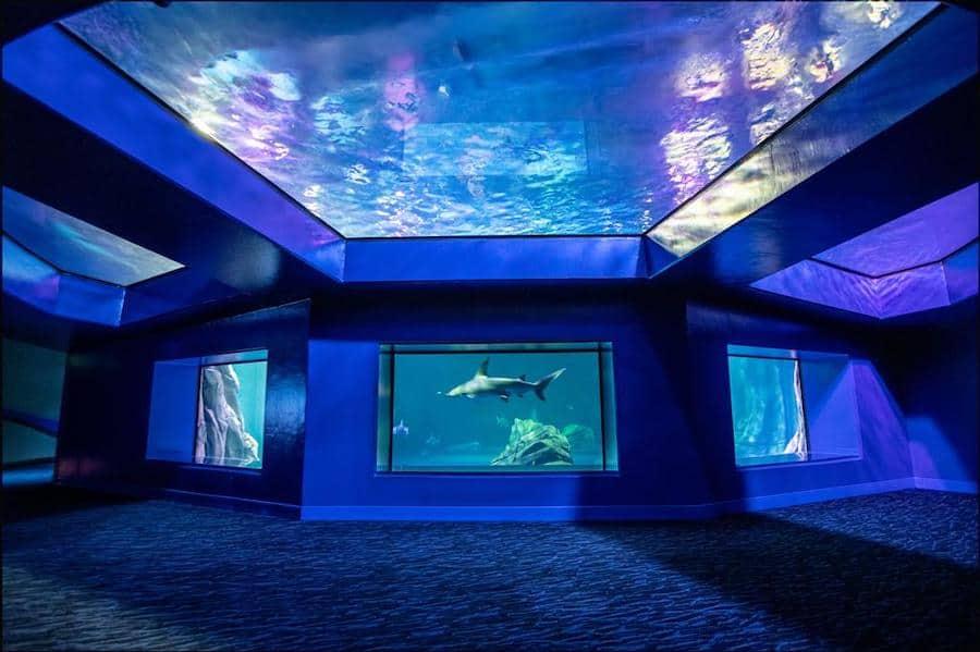 Georgia Aquarium sharks