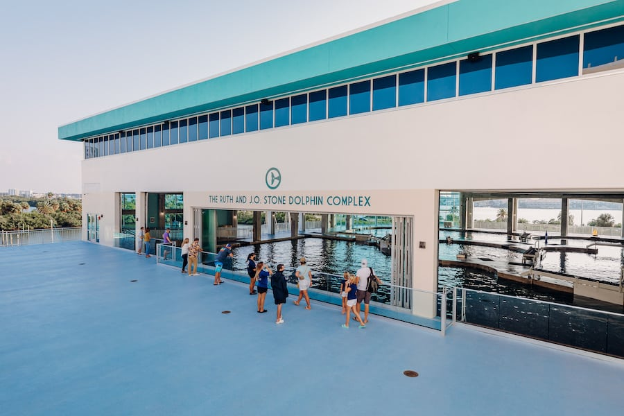 Ruth-JO-Stone-Dolphin-Complex Clearwater Marine Aquarium frank dame