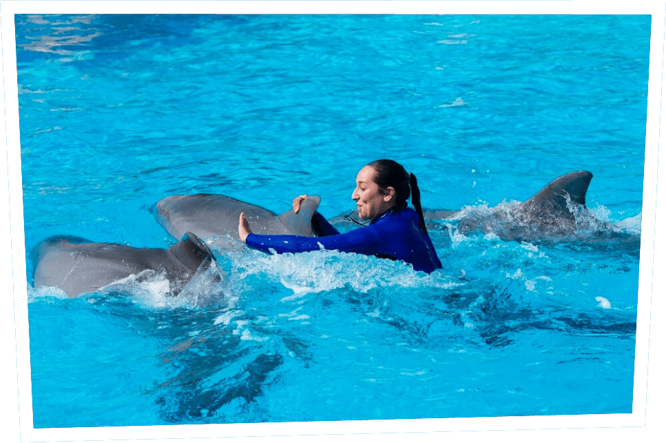 dolphin-show-park-asterix