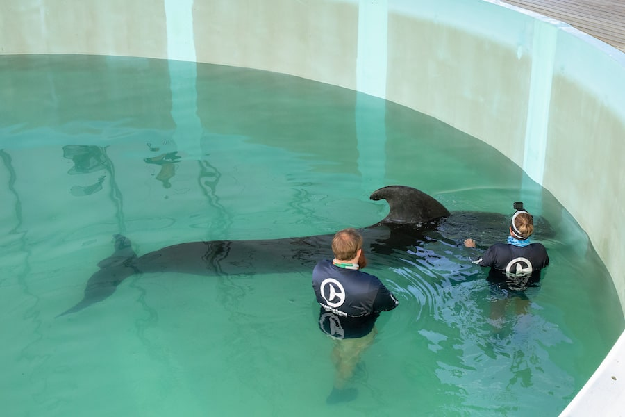 CMA Pilot Whales Release frank dame