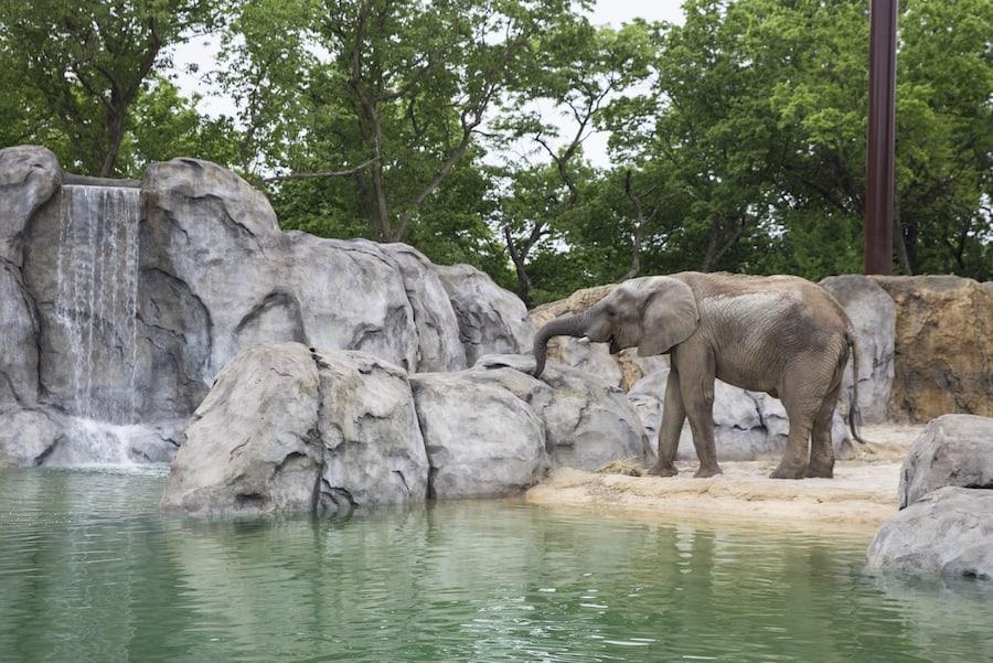 Elephant expedition Kansas City Zoo