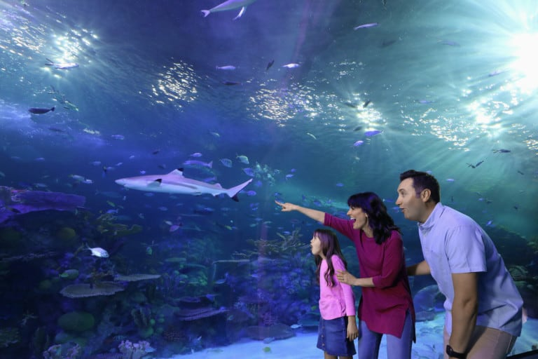 Aquarium at the Boardwalk