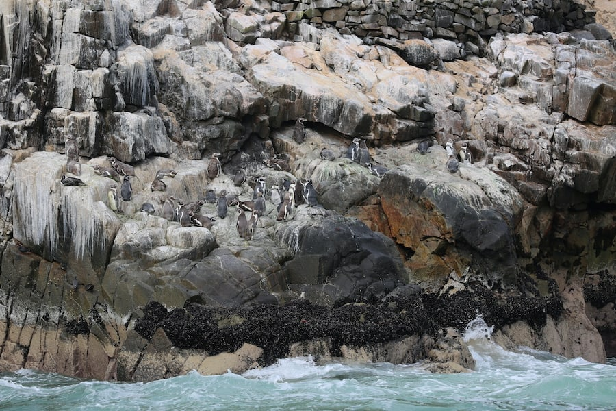 San Juan penguin project Peru