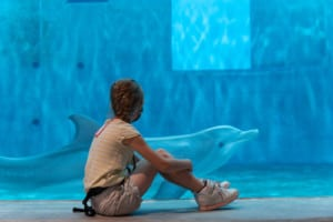 Winter the dolphin Clearwater Marine Aquarium