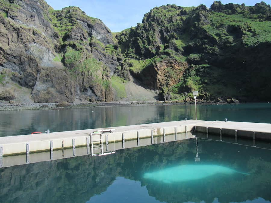 bayside care pool at beluga whale sanctuary iceland