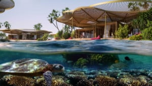 red sea coral bloom sustainability