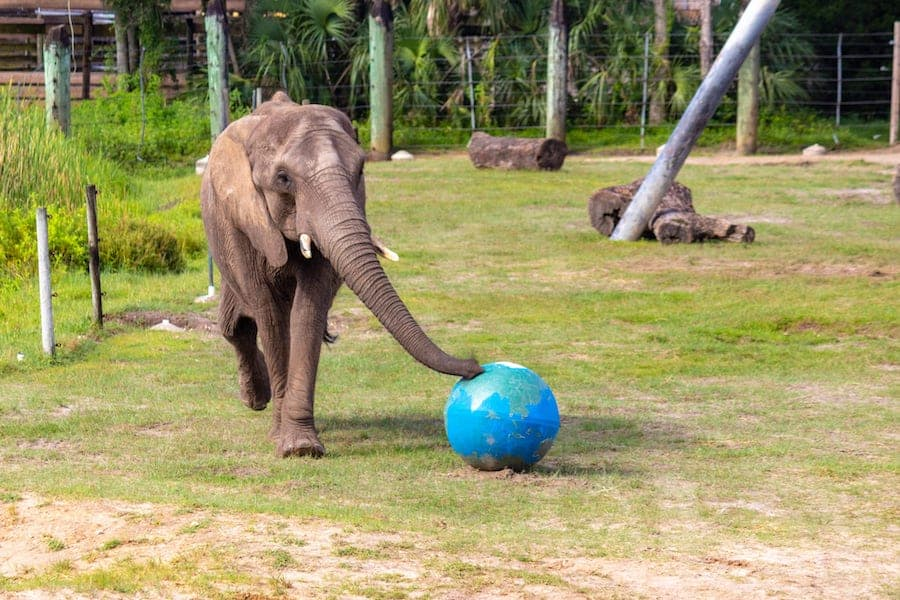 attractions.io provides app for ZooTampa