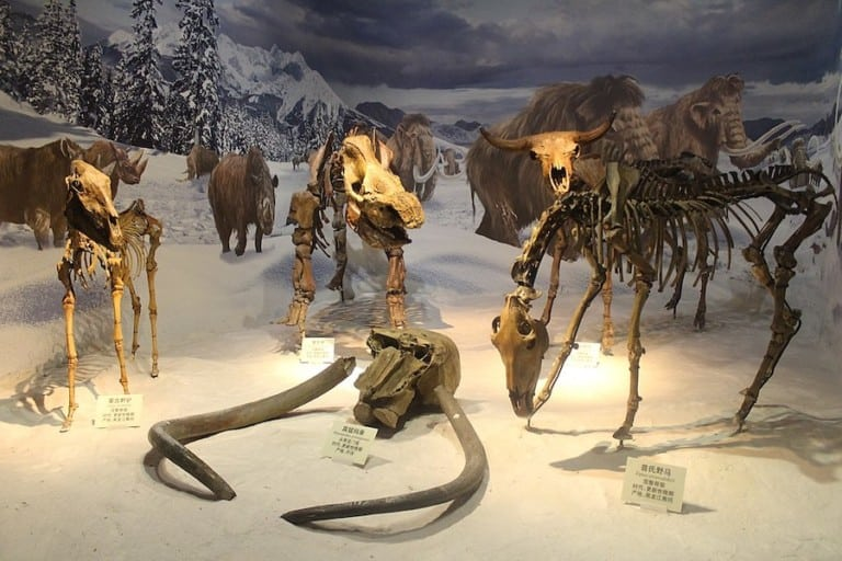 Tianjin Natural History Museum most visited museums asia