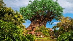 animal kingdom earth day