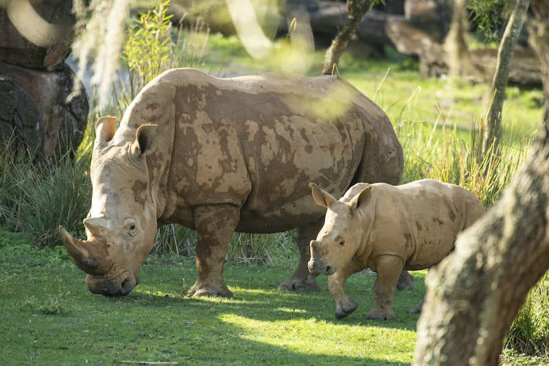 Animal Kingdom unveils nature-themed activities for Earth ...