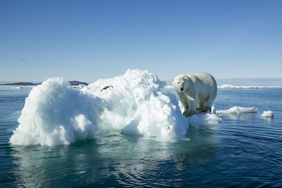 Climate change polar bear sustainable museums