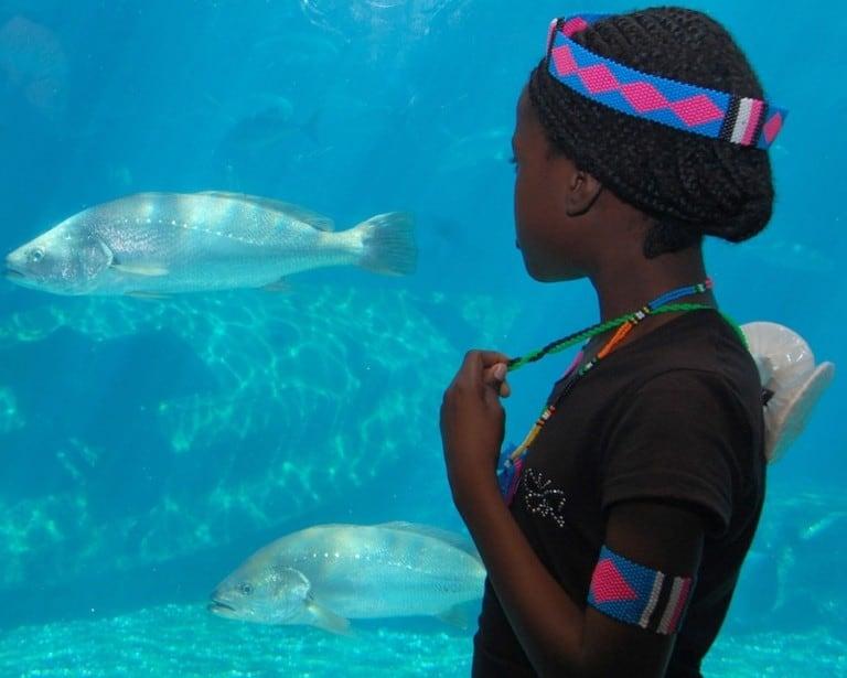 SAAMBR Guest in uShaka Sea World aquarium