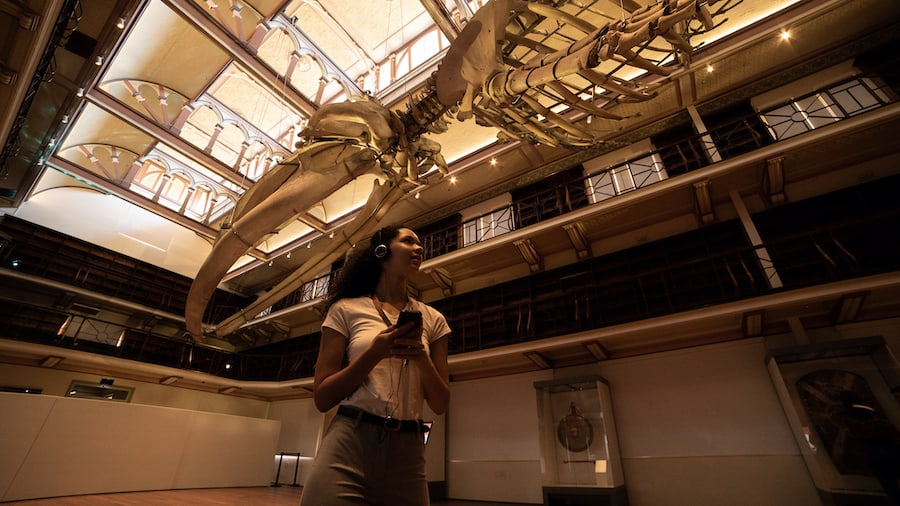 Young woman listening to audio tour looks up at whale skeleton