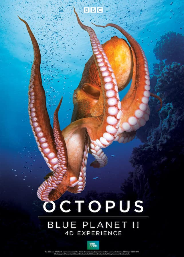 BBC Earth Blue Planet Octopus Poster