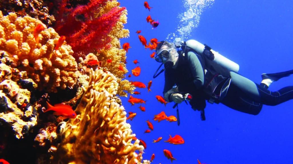 neom kaust coral garden