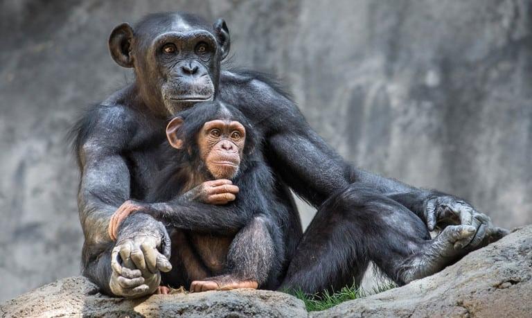 la zoo conservation plan