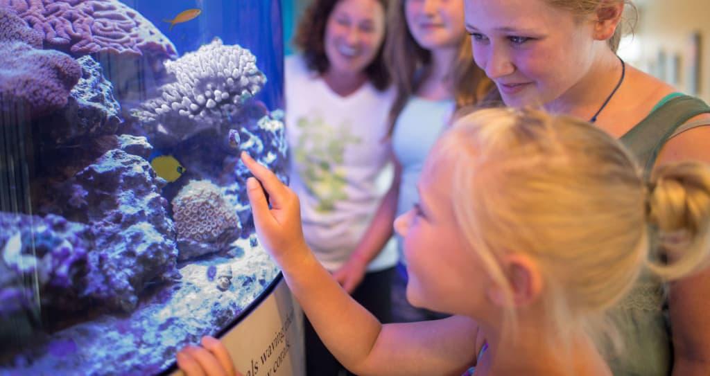 Visitors-at-Mote-Aquarium