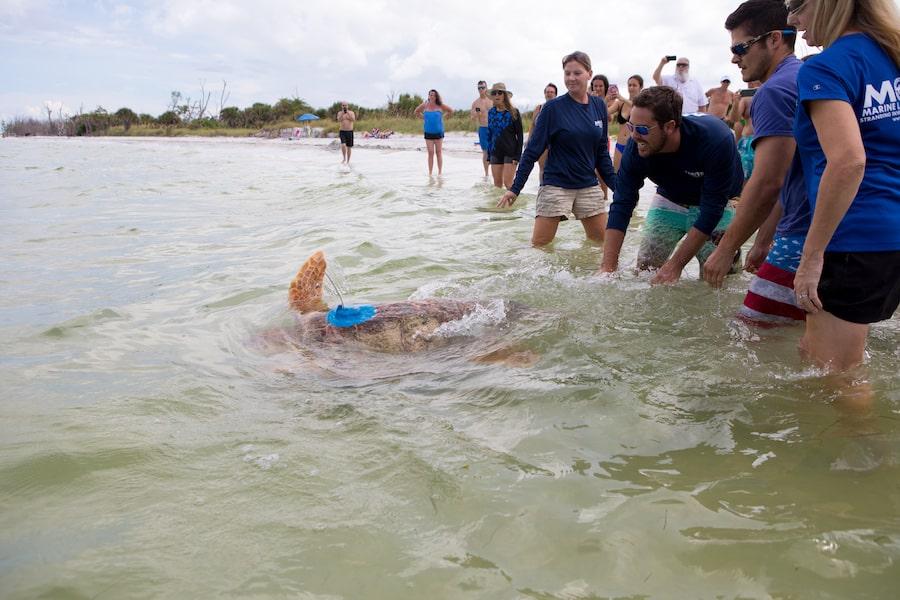 sea-turtle-release-Mote-Marine-Laboratory