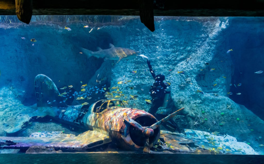 the national aquarium al qana diver feeding shark