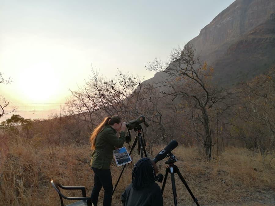 Animal Keeper Katie Vincent_survey wild vultures