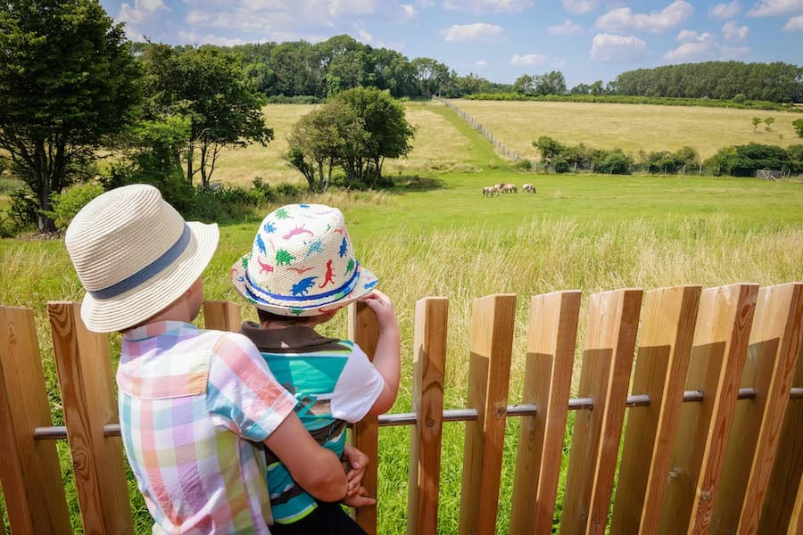 Children enjoy a day out at Marwell Zoo staycation