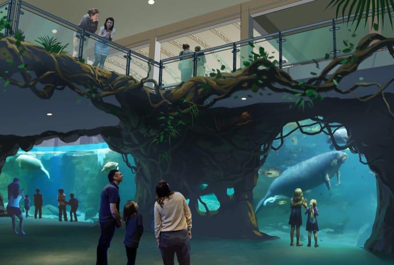 clearwater marine aquarium manatee rehab exhibit