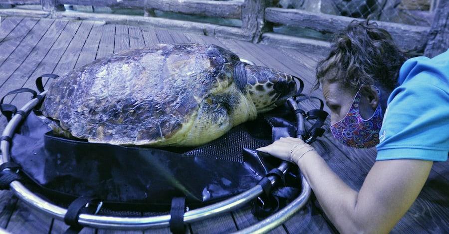 Sea turtle NTA